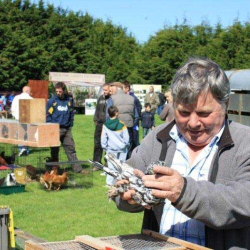 NATIONAL AUTUMN POULTRY SALE – SATURDAY, 22 AUGUST – 10-2PM